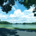 夏の水元公園をサイクリング